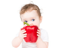 Funny baby biting on a big red paprika Royalty Free Stock Image