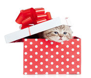 Funny baby cat in red gift box royalty free stock image