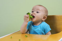 Funny baby eating broccoli. Adorable baby eating broccoli in her chair Royalty Free Stock Photography