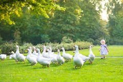 Funny baby girl chasing wild geese in a park. On a beautiful autumn day royalty free stock photography
