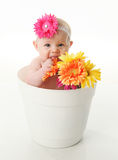 Funny baby girl in a flower pot eating daisies. Funny portrait of an adorable baby girl sitting in a white flower pot along with bright gerbera daisies, eating Stock Image