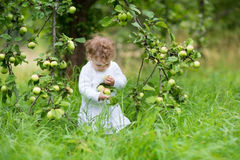 Funny baby girl picking apples in an autumn garden Royalty Free Stock Photo