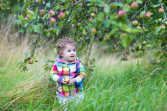 Funny baby girl walking in an apple garden Stock Image