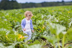 Funny baby girl walking in zucchini field on farm Royalty Free Stock Photography