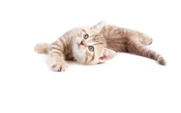 Funny baby kitten lying and looking upward. On white stock images