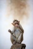Funny baby monkey. Baby monkey sitting on a rock Stock Photo