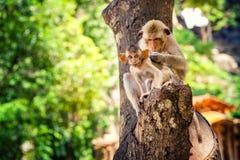 Funny baby monkey in famous popular landmark Bali, Ubud monkey forest Royalty Free Stock Photography