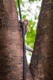 Funny baby monkey in famous popular landmark Bali, Ubud monkey forest Stock Photo