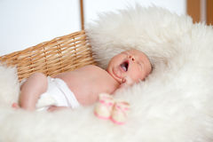 Funny baby sleeping in basket Stock Photo