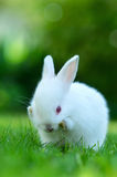 Funny baby white rabbit in grass Stock Photo