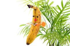 Funny banana plays master mind. Smart fruit on white Stock Images