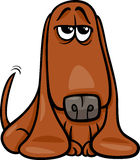 Funny basset dog cartoon illustration Royalty Free Stock Images