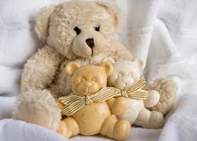 Funny bears. Soft toy the bear  and soap bears on a white background Royalty Free Stock Photos