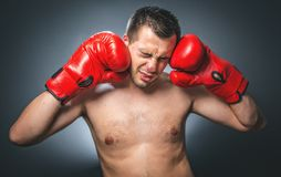 Funny beaten boxer Stock Photos