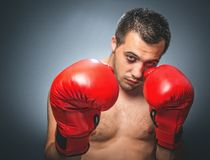 Funny beaten boxer Royalty Free Stock Photo