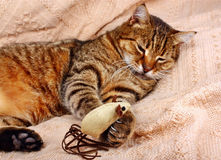 Funny, beautiful cat playing with the mouse Royalty Free Stock Photography