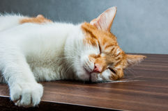 Funny beautiful, domestic cat Stock Images