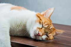 Funny beautiful, domestic cat Stock Photo