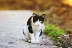 Funny beautiful frightened cute kitten sitting on the walkway on. The street in the spring Royalty Free Stock Photo