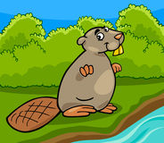 Funny beaver cartoon illustration Royalty Free Stock Photo