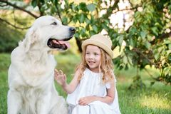 Funny big dog in sunglasses and cute blonde girl in white dress outdoors in park. stock photo