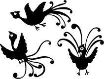 Funny Birds. Illustrations vector clip art Funny Bird Stock Photo