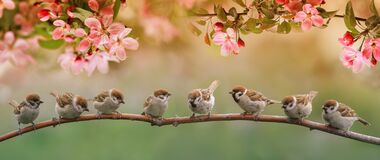 Funny birds and birds chicks sit on the branches of an apple tree with pink flowers in a sunny spring garden