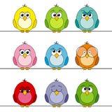 Funny birds Royalty Free Stock Photos