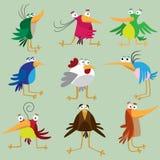 Funny birds set Royalty Free Stock Photography