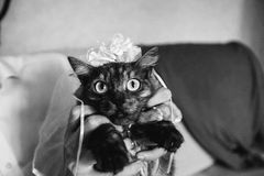 Funny black cat dressed as a bride in a veil Royalty Free Stock Photo