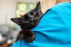 Funny black cat at home. Funny beautiful black cat at home royalty free stock photos