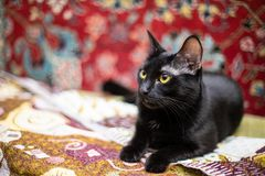 Funny black cat at home. Funny beautiful black cat at home royalty free stock photo
