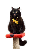Funny black cat wearing yellow bow isolated. Funny black cat wearing yellow bow showing it's tongue into camera isolated Stock Images