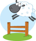 Funny Black Head Sheep Jumping Over The Fence Royalty Free Stock Images