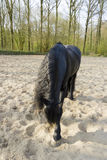 Funny black horse Stock Photography