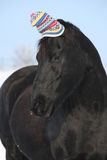 Funny black horse with winter hat Stock Photography