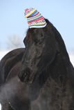 Funny black horse with winter hat Royalty Free Stock Image