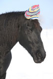 Funny black horse with winter hat Royalty Free Stock Images