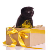Funny black kitten in a box set Stock Photography