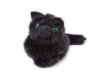 Funny black kitten Royalty Free Stock Photography