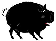 Funny black pig  illustration. Funny pig black and white  illustration isolated on white Royalty Free Stock Photography