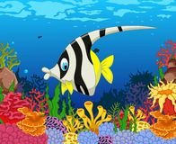 Funny black and white angel fish cartoon with beauty sea life background. Illustration of funny black and white angel fish cartoon with beauty sea life Royalty Free Stock Photography