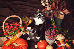 Funny black and white cat among autumn vegetables Stock Images