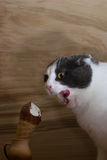 Funny black and white cat eating ice cream cone on wooden background stock image