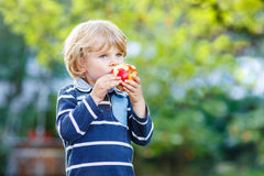 Funny blond kid boy eating healthy apple. Funny little kid boy with apple on his first day to elementary school or nursery. Outdoors.  Back to school, kids Stock Photo