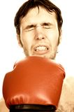Funny boxer. Picture of a very Funny boxer Stock Photo