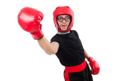Funny boxer isolated Stock Photography
