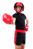 Funny boxer isolated Royalty Free Stock Images