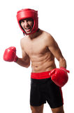 Funny boxer isolated Royalty Free Stock Photography