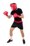 Funny boxer isolated on the white Stock Photo